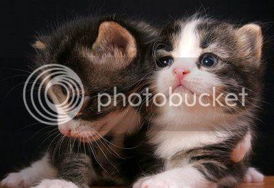 Gatto, gattino, micio, miciotto, micetta, micio piccolo, mamma gatta, foto gatto, immagini gatti