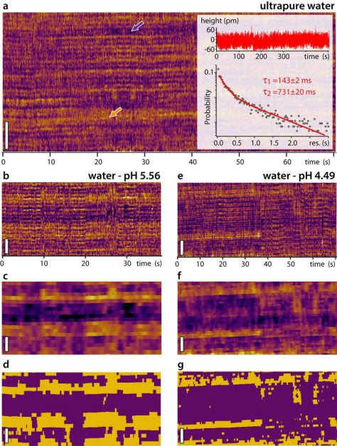 Direct observation of the dynamics of single metal ions at the...
