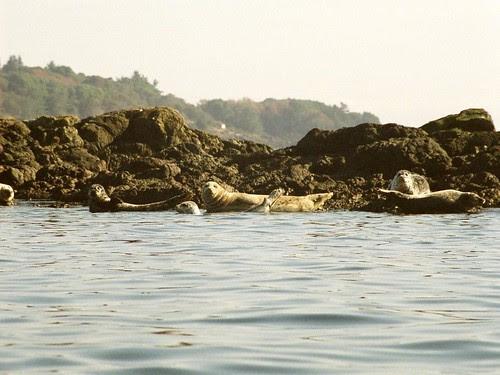 A Flock of Seals