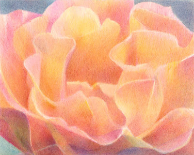 Rosa #2 a coloured pencil drawing by Katherine Tyrrell