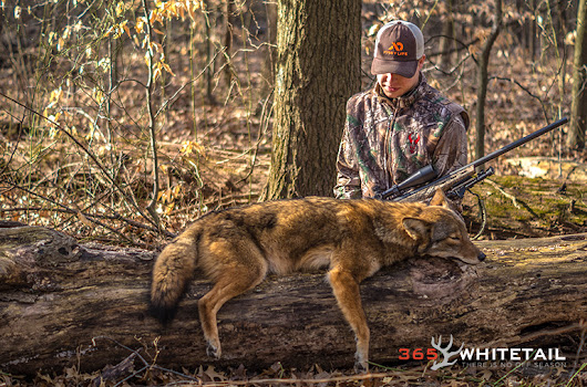 A Beginner's Guide To Calling Coyotes | 365 Whitetail