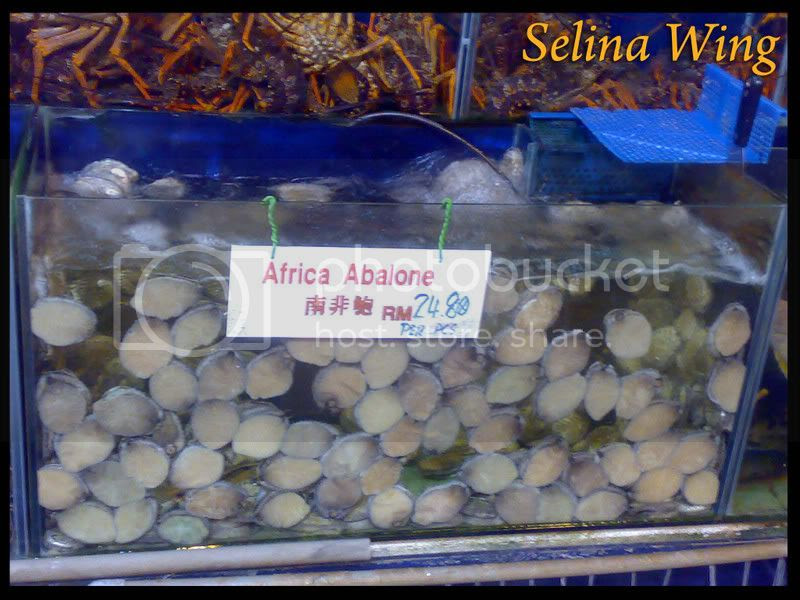 africa abalone