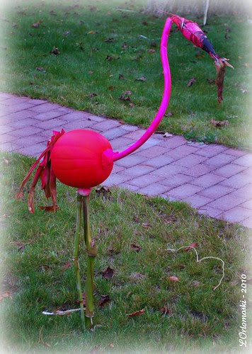 A Pink Pumpkin Flamingo