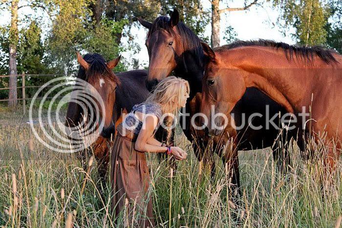 field,morning light,braid,animals