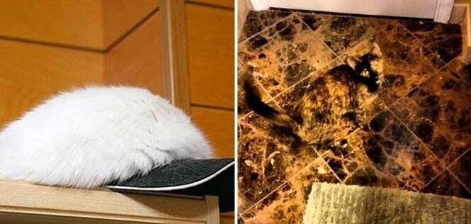 Gatos que têm o poder de se camuflar