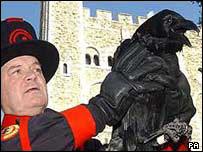 Ravenmaster Derrick Coyle with raven