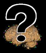 [questioning brain]