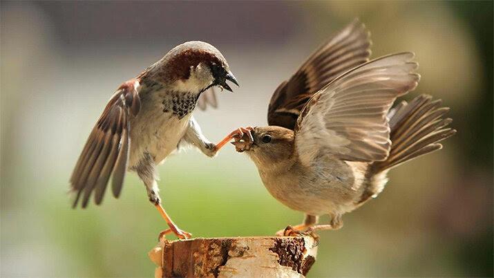 Фото из мира Животных