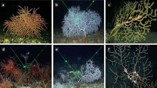 Unlocking the mysteries of deepwater corals to restore the Gulf of Mexico