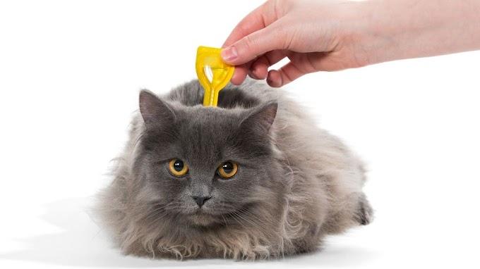 ¿Por qué hay que desparasitar a los gatos?
