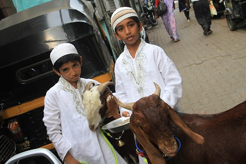 One Thing Muslim Give Utmost Respect To The Sacrificial Goat On Eid by firoze shakir photographerno1