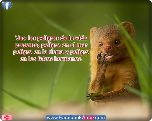 Frases De Animales 94 Frases