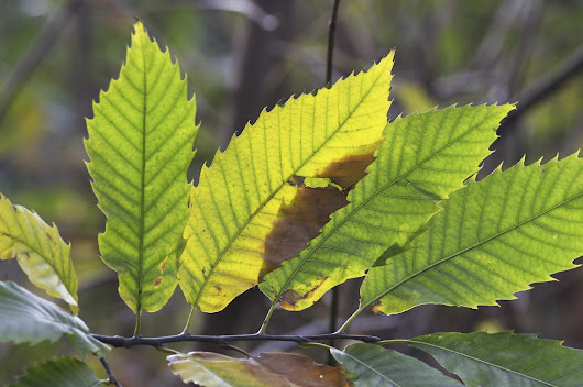 Leaf Identification – Learn About Different Leaf Types In Plants