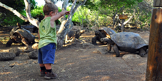 Why travel to Galapagos? ⋆ Galapagos Islands - Travel Guide