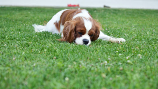 Know the Ways Your Yard Can Kill Your Pets