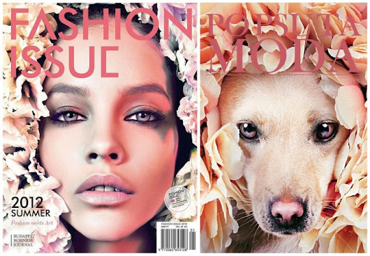 Non Profit Poses Dogs As Fashion Models To Speed Up Adoption (And Its WORKING!)