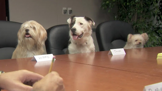 Ad of the Day: Big Lots Does Focus Groups With Animals Because They're People, Too