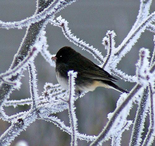 Frozen-Fog-11_edited-1