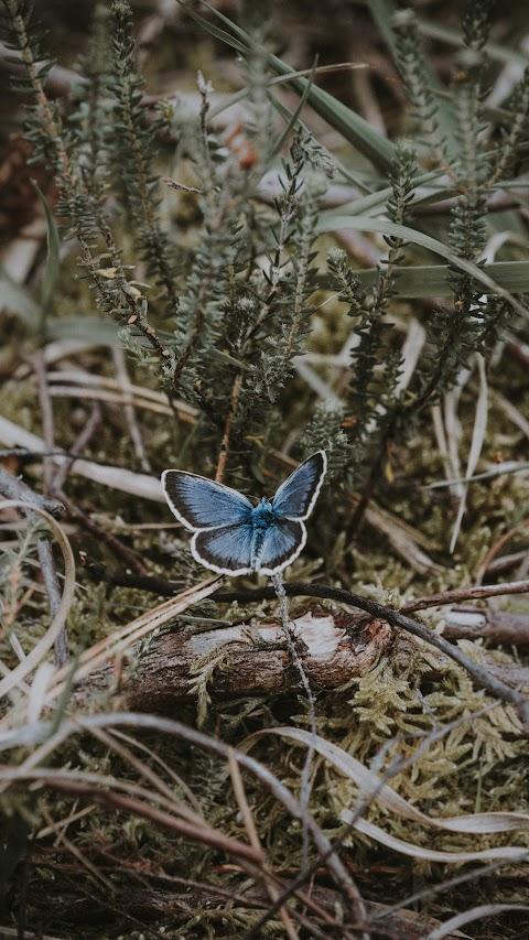 خلفية طبيعة من النباتات وفراشة زرقاء اللون على الاغصان