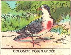 oiseaux mart 3
