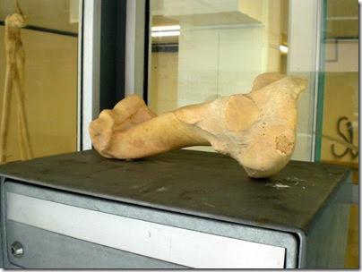 S16 - der unbekannte Knochen