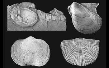Photos of a bivalve on upper right, two brachiopods on bottom, and crustacean on upper left.