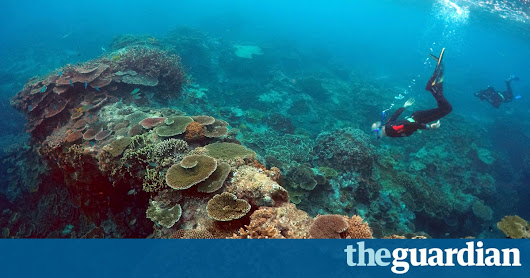 Great Barrier Reef valued at $56bn as report warns it's 'too big to fail' | Environment | The Guardian