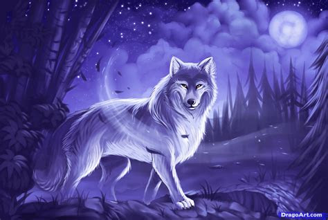 draw  gray wolf timber wolf step  step
