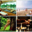 Top 6 Attractions to visit in Kerala: Wildlife, Beaches, Ayurveda, Houseboat