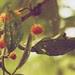 Extrañas florecillas silvestres