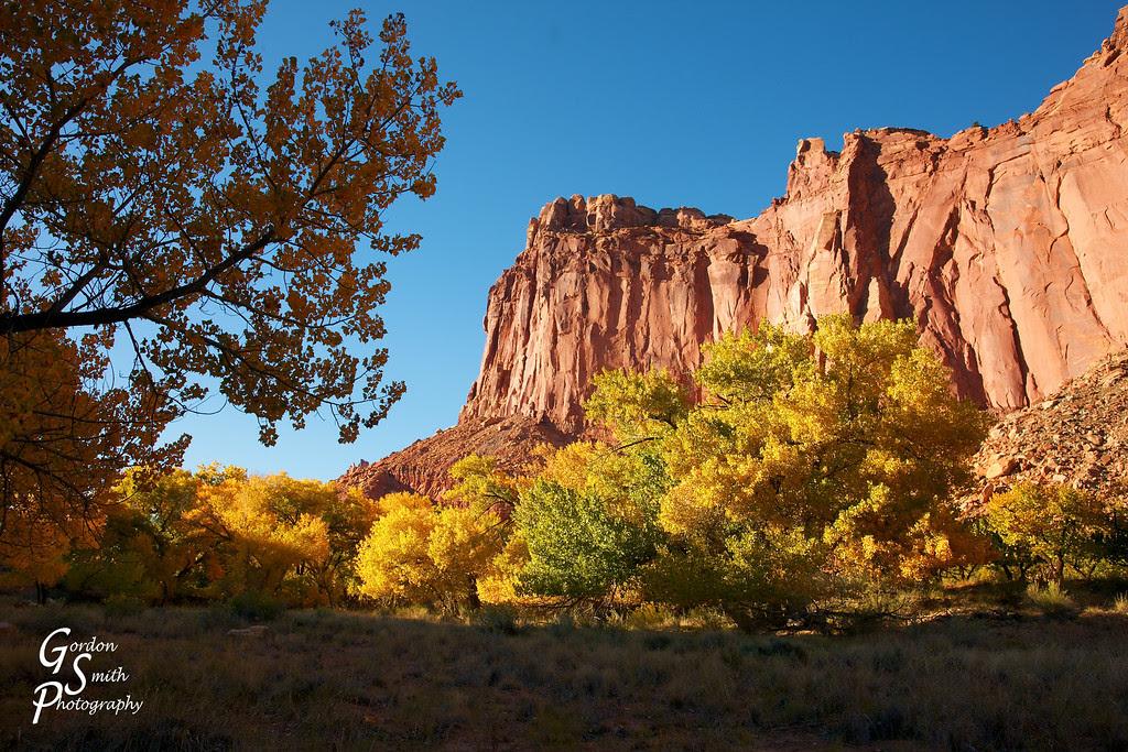 autumn trees capitol reef