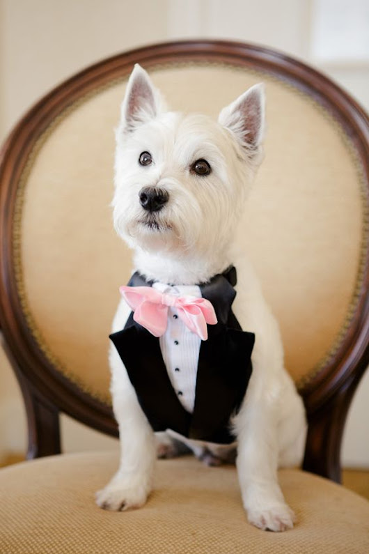 Dogs at Weddings :)
