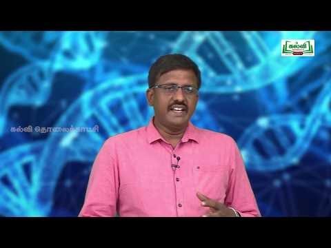 NEET Zoology Structure Of DNA Kalvi TV