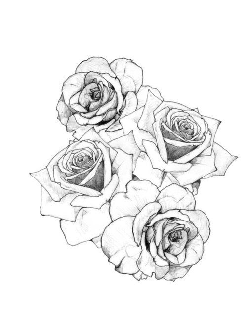 Beautiful Vintage Draw Tattoo Ink Rose Roses Body Art Rose Tattoo