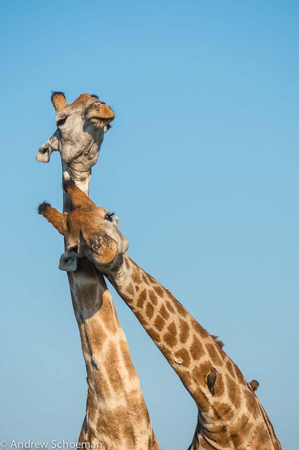 Υπέροχες φωτογραφίες φιλίας ζώων που θα σας φτιάξουν τη διάθεση (13)