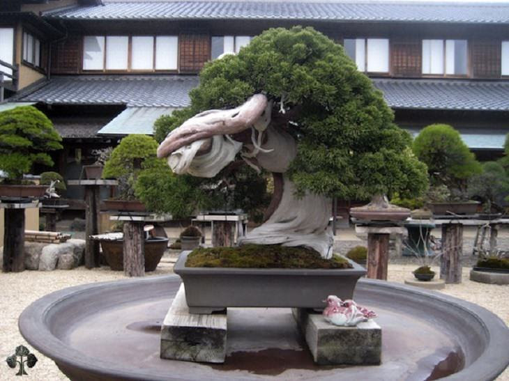 NAture - Bonsai Trees - Rare - Incredible