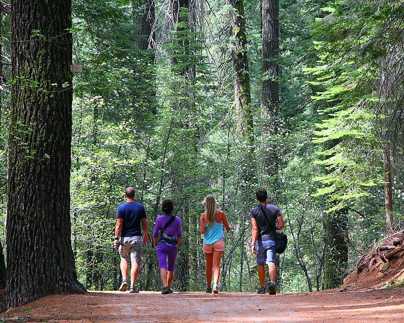 IMG_3539 Tuolumne Grove of Giant Sequoias
