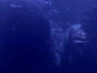 Cryptid Monster Raw Video / Criatura Criptida Captada en Video