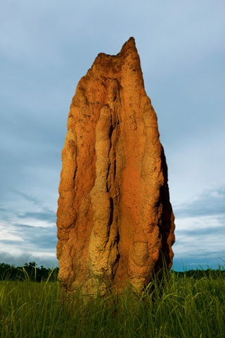ANIMAL ARCHITECTURE, book out April 2014 Cathedral Termite Mound (Nasutitermes triodiae) / Kakadu NP., Northern Territory, Australia