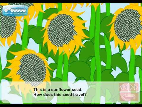 Did you know that seeds travel?