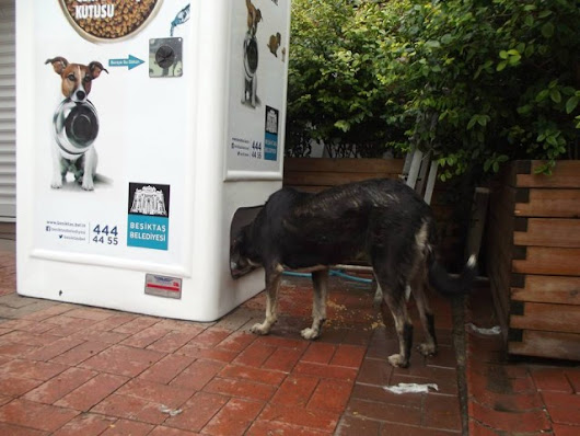 Turkish Recycling Box Provides Food for Stray Animals Every Time a Bottle is Deposited