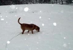 Sophie_snow_12909