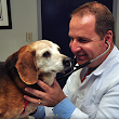 Tips to maintain the optimal health condition of your senior pet