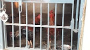 Roosters put behind bars as cockfight betting case evidence by police in Telangana