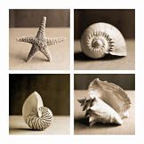 Sea-shells-four-patch_opt_m