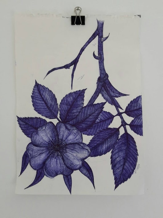 Wild Rose Origanal Illustration Blue Biro on Paper by HayleysDream