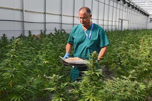 New York moves forward with medical marijuana expansions