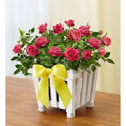 1-800 Flowers Charming Rose Garden Small - Plants