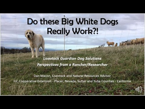 Do these Big White Dogs Really Work?!