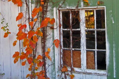 Window Vines